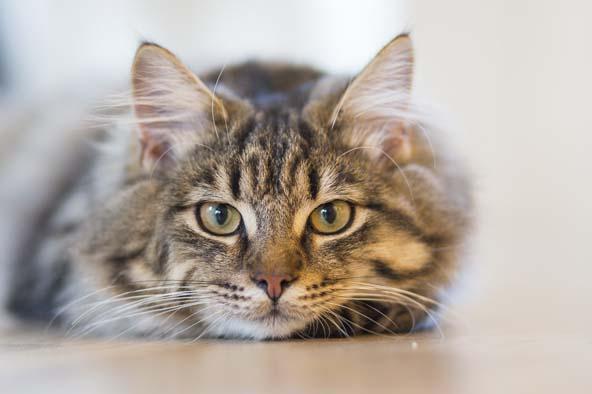 ¿Cómo sé si mi gato está enfermo y qué puedo hacer?